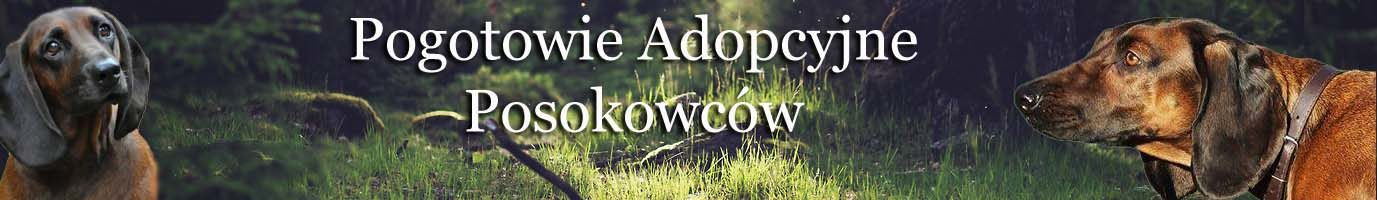 Pogotowie Adopcyjne Posokowców